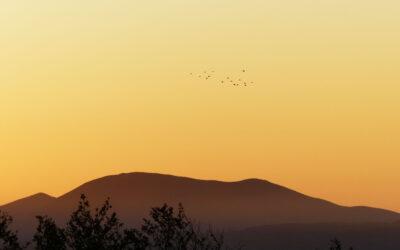 EUSKERA – Jornadas de las aves Auritz – Burguete 2013